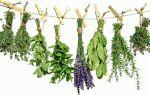 Травы от обильного кровотечения при месячных: виды и способы использования
