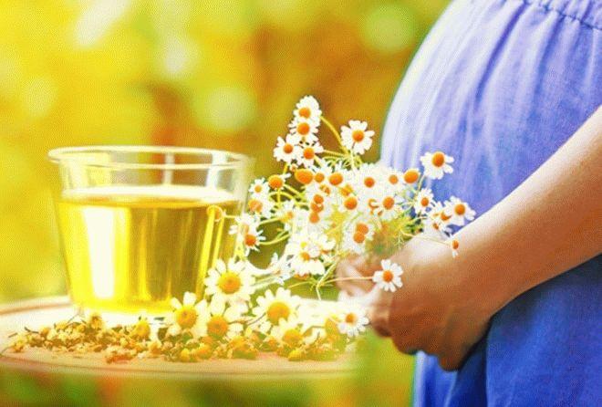 Польза ромашки для беременных