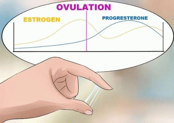 выделения в течении менструального цикла