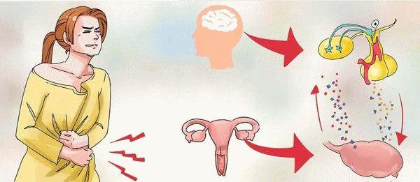 физиологический процесс менсттруации