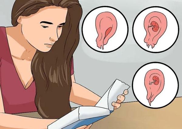 Эндометрий на ранних сроках беременности узи